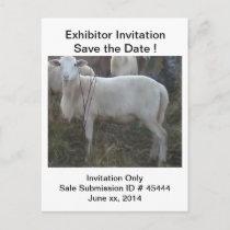 Katahin Hair Sheep Announcement Postcard