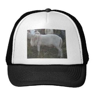 Katahin Hair Sheep Hats