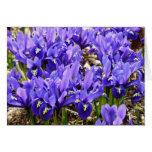 Katherine Hodgkin Irises Blue Purple Spring Floral Card