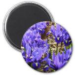 Katherine Hodgkin Irises Blue Purple Spring Floral Magnet