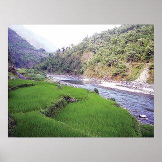 Kathmandu River Rice Terace Poster