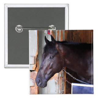 Kathy Ritvo Stables Pinback Buttons