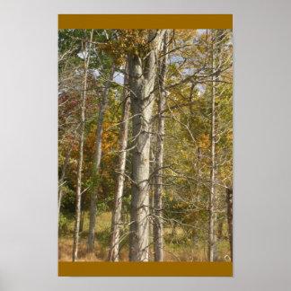 KathysGarden2006-Fall Trees Poster