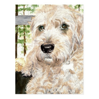 Katie the Wheaton Terrier Post Card