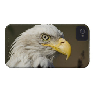 Katmai National Park, Alaska iPhone 4 Case-Mate Case