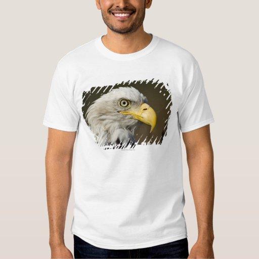 Katmai National Park, Alaska T-Shirt