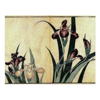 Katsushika Hokusai's Irises Postcard