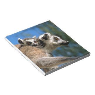 Katta, mono de medio Katta con Joven (Lemur catta)