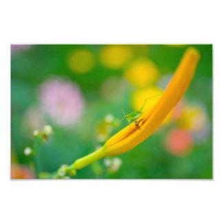Katydid and flowers photo