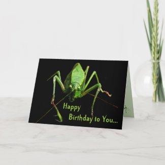 Katydid Birthday card