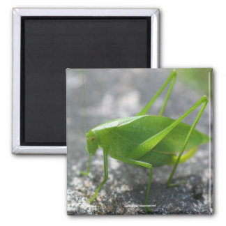 Katydid Grasshopper Nature Photography Magnet