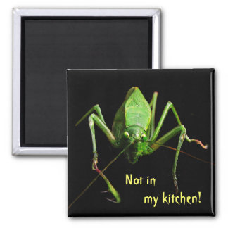 Katydid in the Kitchen Magnet