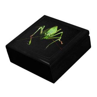 Katydid Jewelry Box