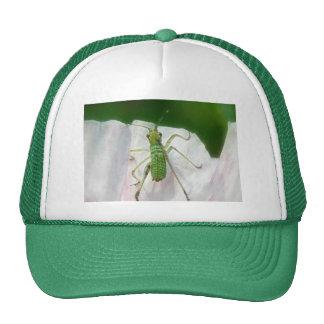 Katydid Nymph - Scudderia Furcata Trucker Hat