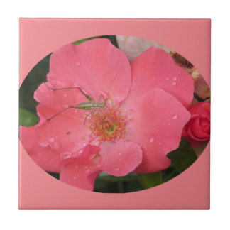 Katydid on Pink Rose Tile
