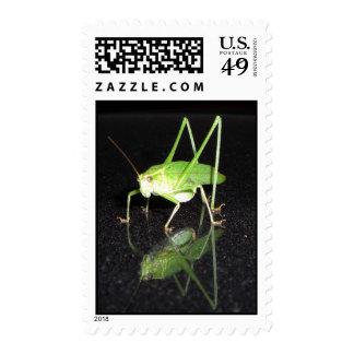 Katydid Reflected Stamps