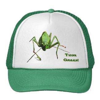 Katydid Think Green