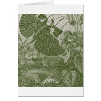 Katydids Card