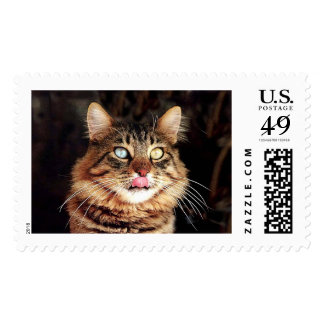 katz11 stamps