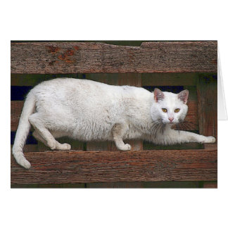 Katz Card