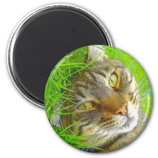 Katz Imán Redondo 5 Cm