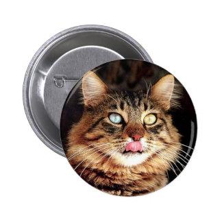 katz pinback button