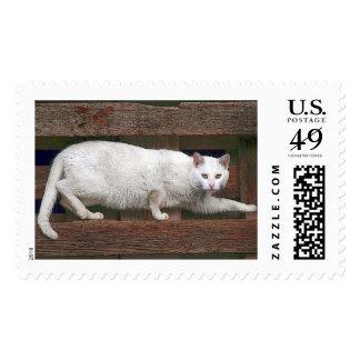 Katz Stamp