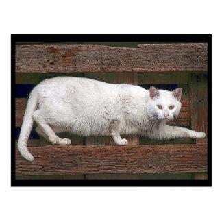 Katz Postcard