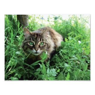Katze Card