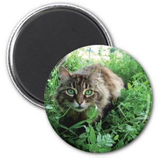 Katze Imán Redondo 5 Cm