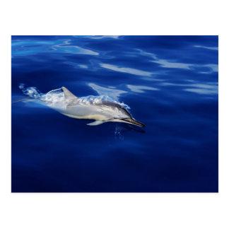 Kauai - Dolphin Breaking Free Postcards