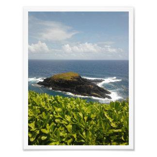 """""""Kauai Isle Oasis"""" Photo Print"""