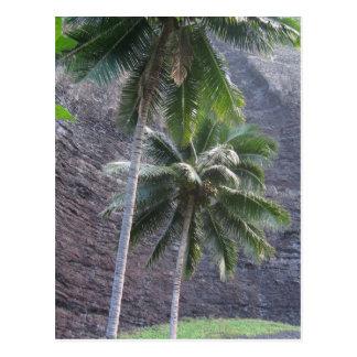 Kauai Palm Trees Postcard
