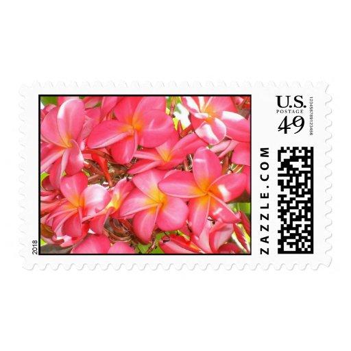 Kauai Plumeria Postage Stamp