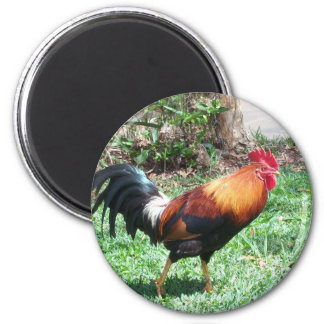 Kauai Rooster Magnet