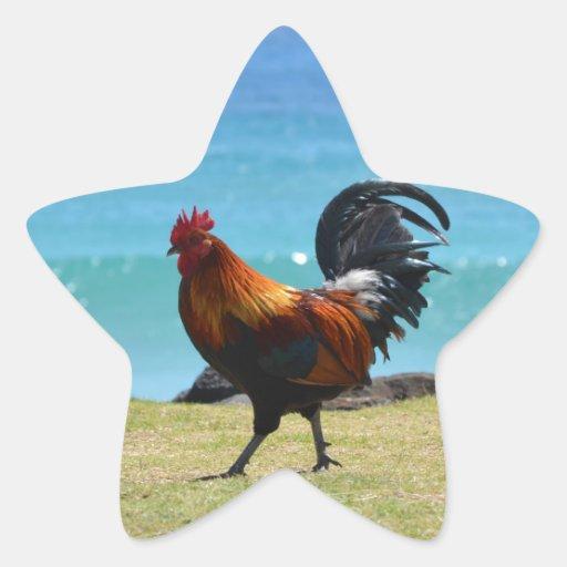 Kauai rooster stickers