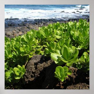 Kauai succulents 1 posters