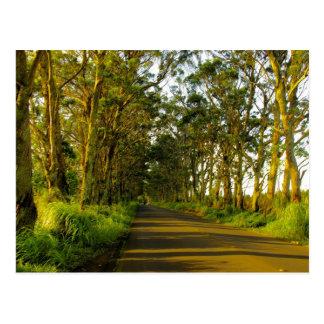 Kauai - The road to Poipu Postcards