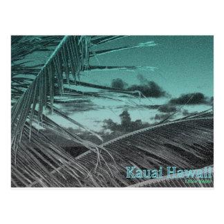 Kauaii Palm Fronds Postcard