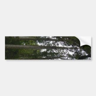 Kauri Forest Bumper Sticker