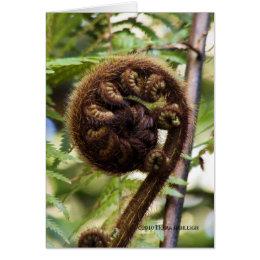 Kauri Forest Fern Card