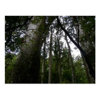 Kauri Forest Postcard