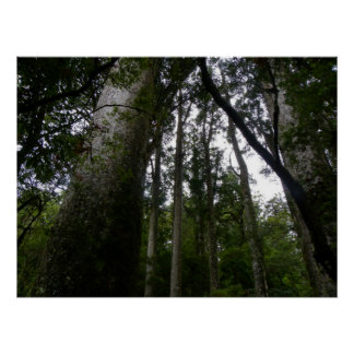 Kauri Forest Poster
