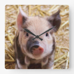 Kawaii cute adorable farm baby piglet pig animal square wallclocks