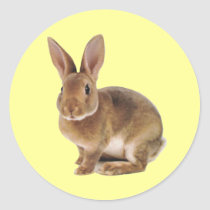 Kawaii Cute Bunny Rabbit Classic Round Sticker