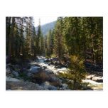 Kaweah River in Sequoia National Park Postcard