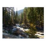 Kaweah River in Sequoia National Park Postcard