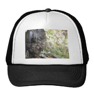 Kea: El loro alpino Gorro