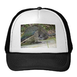 Kea: El loro alpino Gorras
