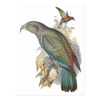 Kea (small only) postcards